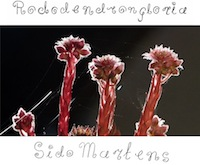 sido martens - rododendrongloria